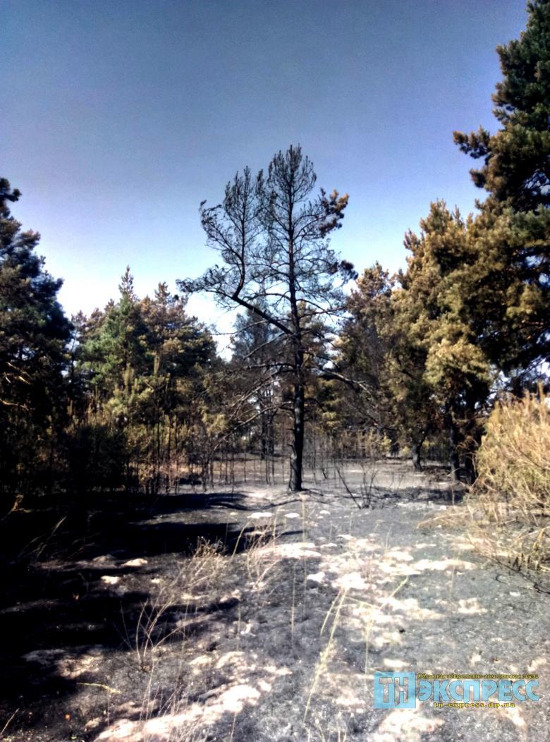 Петропавловский лес